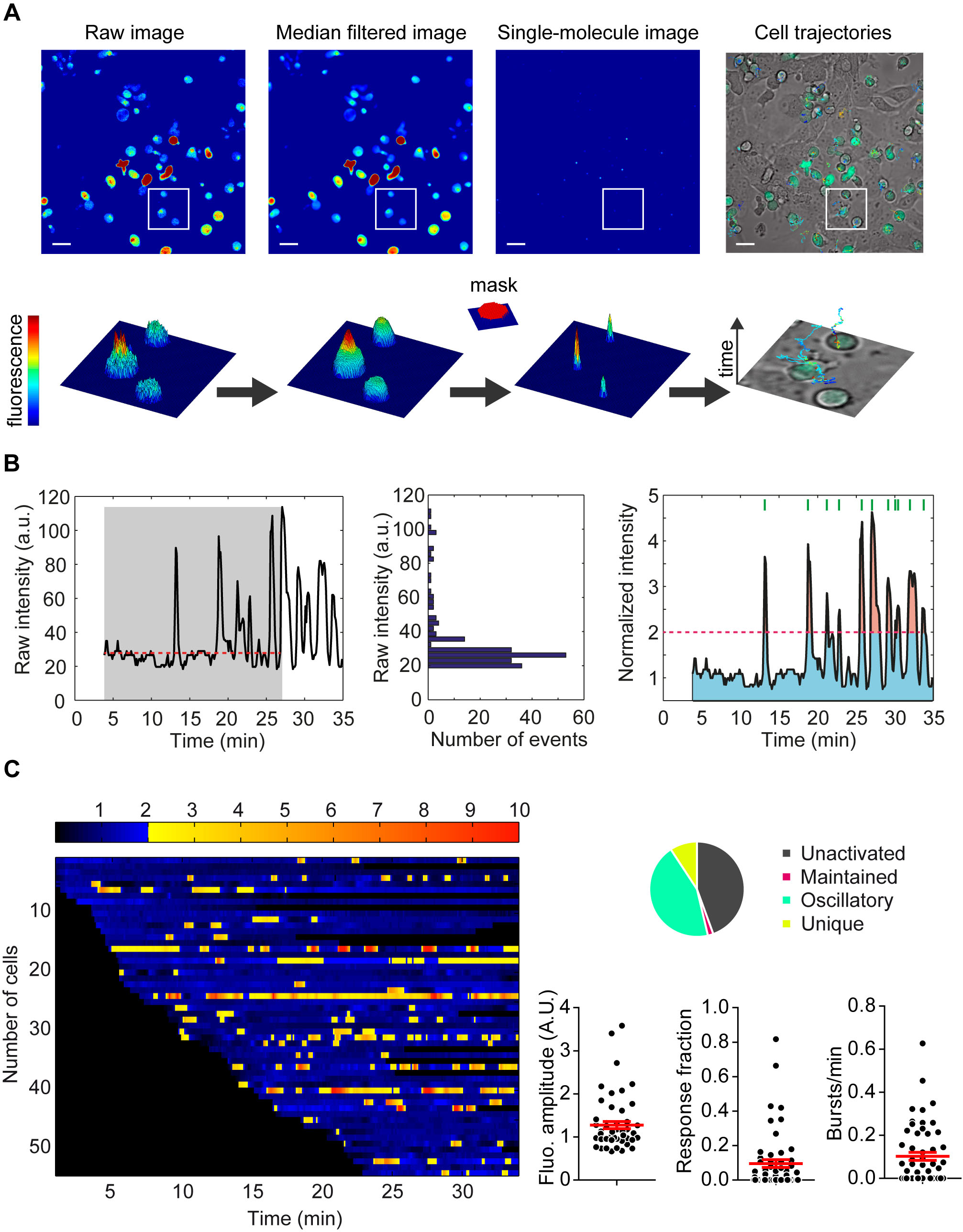 t cell calcium signal processing  (a) automatic tracking of high density  moving cells by maaacs (b) automatic signal analysis (normalization,  thresholds)